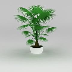 大厅盆景棕榈树模型3d模型