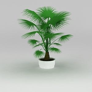 大厅盆景棕榈树模型