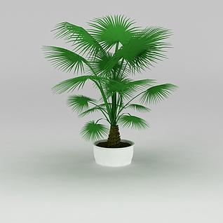 大厅盆景棕榈树3d模型3d模型