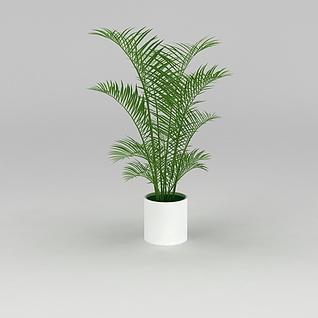 大厅绿植散尾葵3d模型
