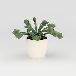 绿色捕蝇草3d模型