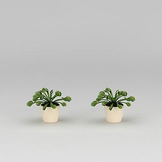 捕蝇草3d模型3d模型
