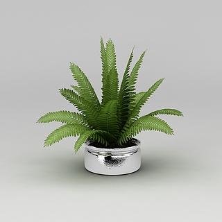 绿色植物盆栽3d模型