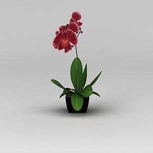 仿真蘭花花盆裝飾品模型3d模型