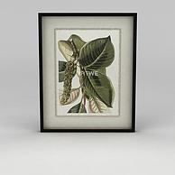 植物挂画3D模型3d模型