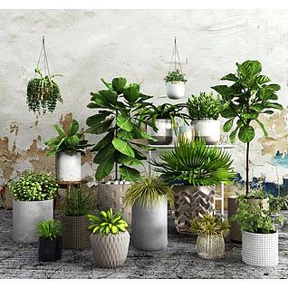 现代室内盆栽组合3d模型3d模型