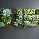 多肉植物墙模型