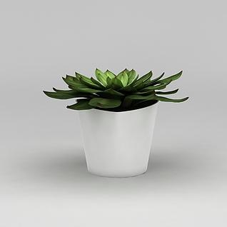 室内多肉绿植盆栽3d模型3d模型