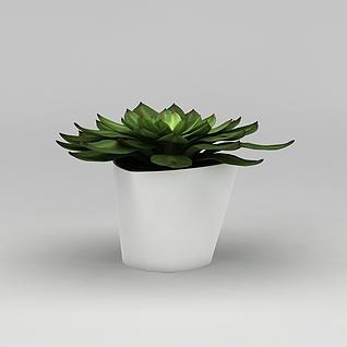 观音莲多肉植物盆栽3d模型3d模型