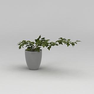 绿植花盆3d模型