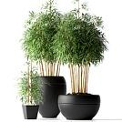室内竹子盆栽模型