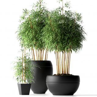 室内竹子盆栽3d模型