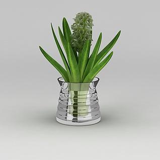 花盆绿植风信子3d模型
