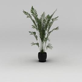 室内<font class='myIsRed'>花盆</font>绿植散尾葵3d模型