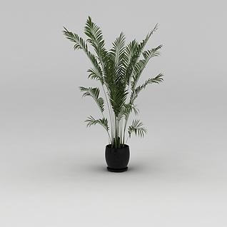 室内花盆绿植散尾葵3d模型
