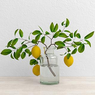 柠檬植物3d模型