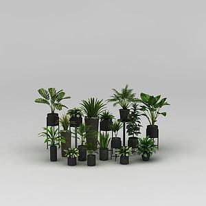 植物盆栽组合模型3d模型
