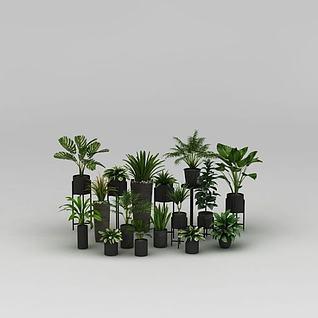 植物盆栽组合3d模型