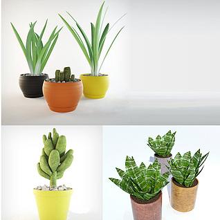 仙人掌芦荟水葱植物3d模型