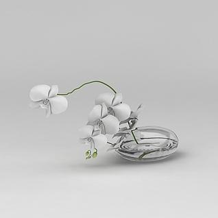 水培花卉3d模型