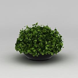 绿植<font class='myIsRed'>花盆</font>3d模型