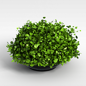 3d绿植<font class='myIsRed'>花盆</font>模型