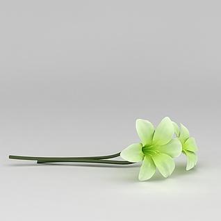 绿色花朵3d模型