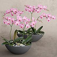 兰花盆栽3D模型3d模型
