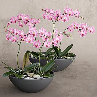 兰花盆栽3d模型