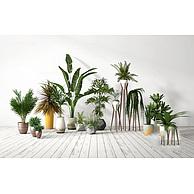 庭院植物盆栽3D模型3d模型
