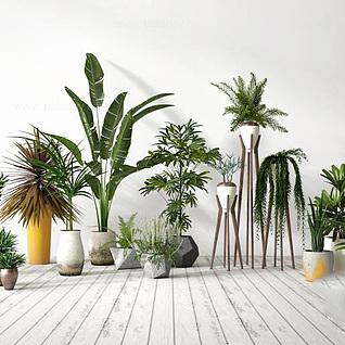 庭院植物盆栽3d模型