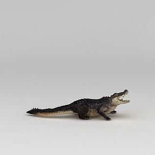 鳄鱼3d模型
