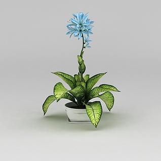 室内花卉盆栽3d模型