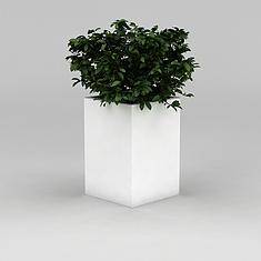 室内绿植盆景3D模型3d模型