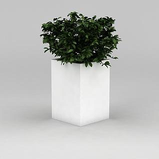 室内绿植盆景3d模型