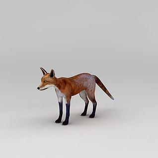 红狐3d模型