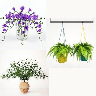 花卉植物盆景3d模型