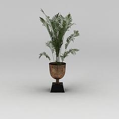 室内散尾葵绿植盆栽3D模型3d模型