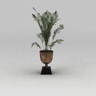 室内散尾葵绿植盆栽3d模型