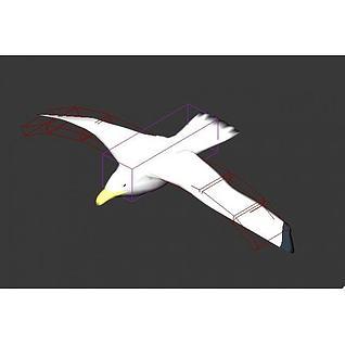 海鸥3d模型