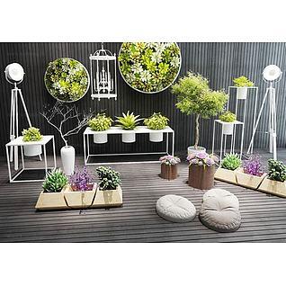 小清新多肉植物盆栽3d模型