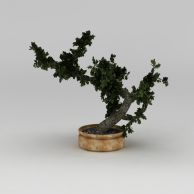 绿植盆景3D模型3d模型