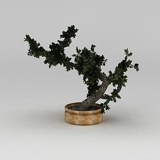 绿植盆景3d模型
