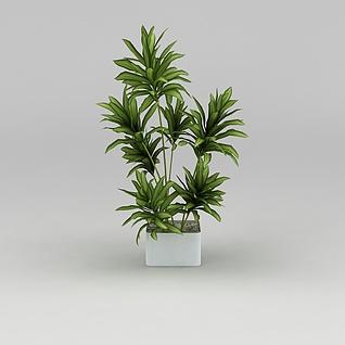 室内观赏绿植3d模型