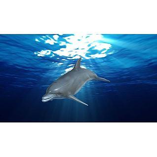 海豚3d模型3d模型