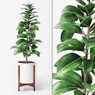 观叶绿植盆栽3d模型