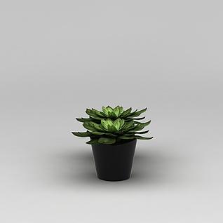 室内绿植观音莲3d模型