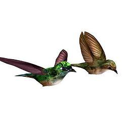 2只小鸟模型