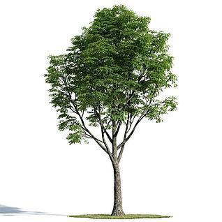 绿化乔木3d模型