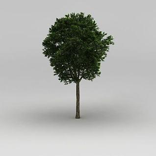 大树3d模型
